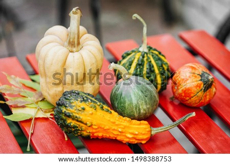 Different varieties of squashes and pumpkins. Colorful vegetables. Autumn concept