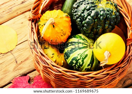 Different varieties of squashes and pumpkins in basket.Autumn harvest. #1169689675
