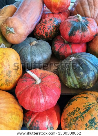 Different varieties of squashes and pumpkins on the farmers' market. Colorful vegetables. Top view. Halloween or Thanksgiving vertical backdrop.
