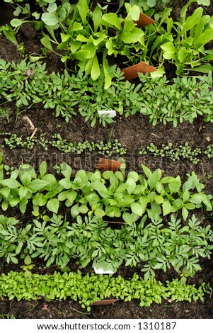 Different vegetable seedlings growing in rows marked with labels