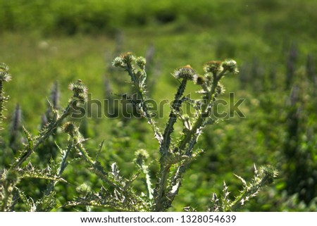 Different weeds on the green field. Meadow, pasture in spring on a sunny day. Stock background, photo