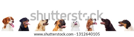 Differents dogs looking at camera isolated on a white background #1312640105