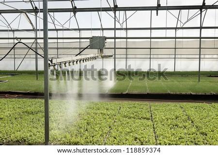 diffusers watering seedlings in a greenhouse in Madrid, Spain