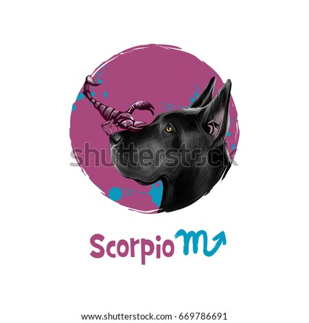 Digital art illustration of astrological sign Scorpio. 2018 year of dog. Eighth of twelve zodiac signs. Horoscope water element. Logo sign with scorpion. Web, print graphic design clip art. Add text