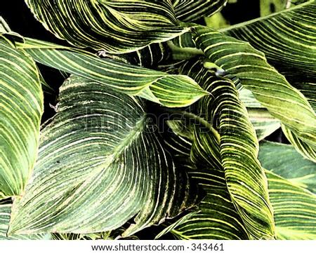 digital art leaves