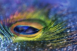 Digital art paint effect, abstract composition Multicolored peacock feather,