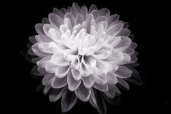 digital art: shiny flower against black background