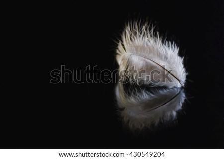 Digital art, textured composition, Bird feather, minimalist concept, reflection, black background                                #430549204