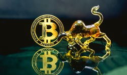 Digital coin money model Bitcoin  ้and Bull model Lay on the reflective glass floor. Concept  price trend of the BTC. coin value will  uptrend or downtrend with a bull model.