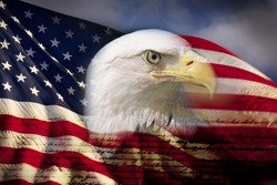 Digital composite: American bald eagle and flag is underlaid with the handwriting of the US Constitution