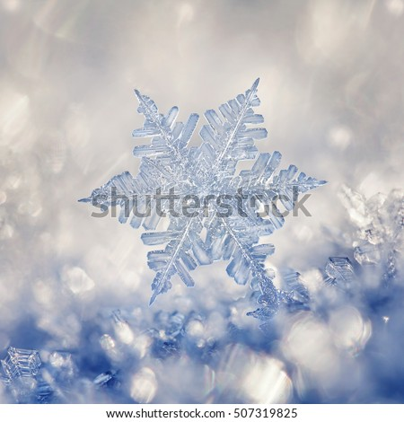 Digital composite of snowflakes and frost. #507319825