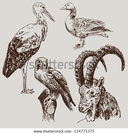 digital drawing of stork, falcon, goose  and  goat, raster version