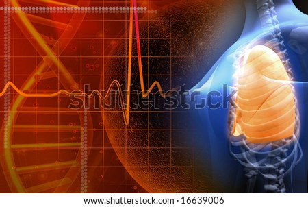 Digital illustration of a female human skeleton in blue