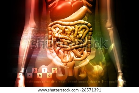 Digital illustration of a human digestive system and Skelton