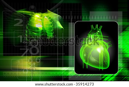 Digital illustration of human lungs and heart in colour background