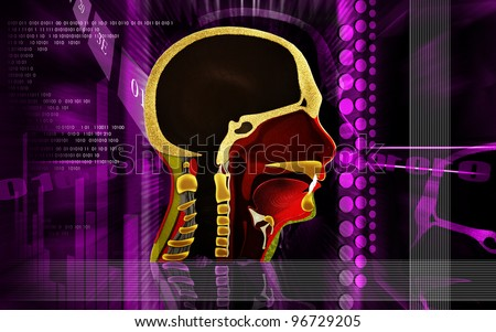 Digital illustration of Pharynx in colour background