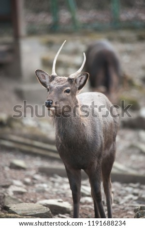 Dignified a neat bride deer