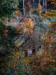 dilapidated cottage overgrown in autumn forest