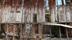 Dilapidated wooden house covered with overgrown vegetation