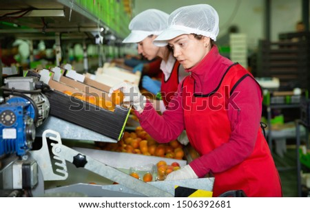 Diligent  cheerful smiling woman working on producing sorting line at fruit warehouse, preparing apricots for packaging