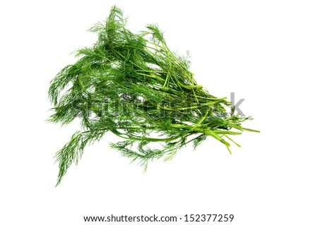 dill aneth is a green spice used as herb for cooking. vegetable  isolated