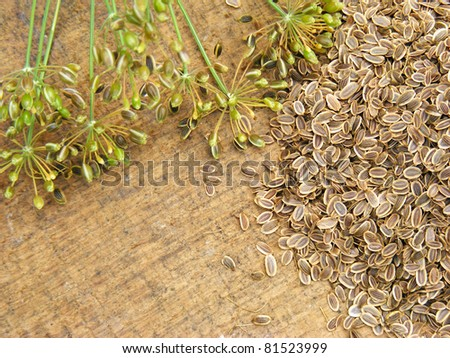 Dill with seeds on a wooden board