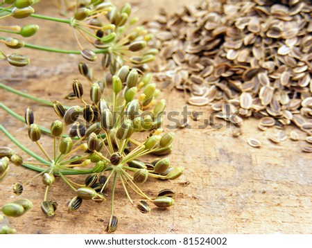 Dill with seeds on a wooden board - stock photo