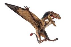 Dimorphodon Dinosaur on white background  .