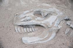 dinosaur bones in the sand, dinosaur skull excavation. Fun for kids to dig up dinosaur bones.