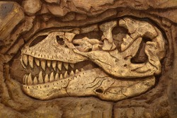 dinosaur, fossil