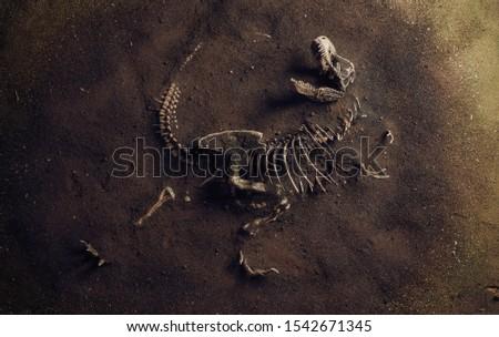 Dinosaur Fossil (Tyrannosaurus Rex) Found by Archaeologists Сток-фото ©