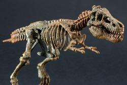 dinosaur Tyrannosaurus T Rex statuette skeleton on black background, t-rex toy