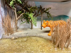 Diorama of a Bengal Tiger in his natural habitat.
