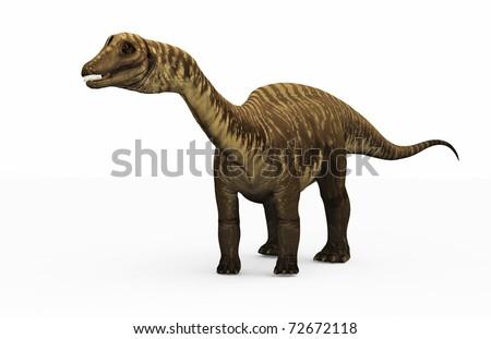 Diplodocus dinosaur on white
