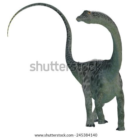 Diplodocus Dinosaur on White - Diplodocus was a sauropod herbivorous dinosaur that lived in the Jurassic Era of North America.