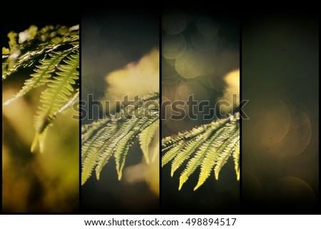 Diptych fall, autumn fern plant, bokeh light background - Shutterstock ID 498894517