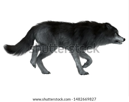 Dire Wolf Side Profile 3d illustration - The carnivorous Dire Wolf lived in North and South America during the Pleistocene Period. Photo stock ©