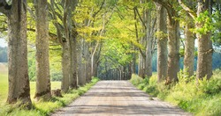 Dirt country road (alley) through the green oak trees on a clear summer day. Poland. Soft sunlight, shadows on the ground. Idyllic rural scene. Nature, seasons, ecotourism, cycling, remote places