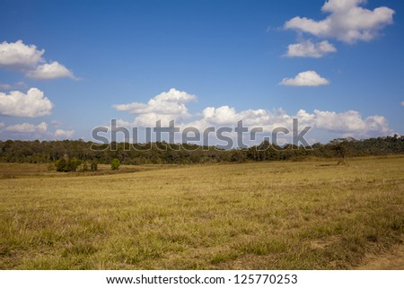 dirt highland, yellow rough road in forest field