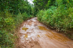 Dirt mud road in jungle of Vietnam after rain