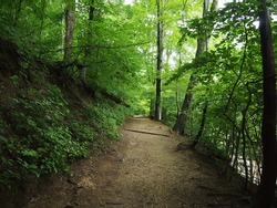 Dirt Path leads upwards in Forest in Rock Creek Park, Washington DC.