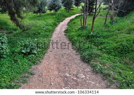 Dirt path through forest. Nature landscape background.