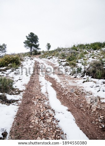 Dirt path with some vegetation and a tree sorrounded by snow during Filomena storm in Alcublas, Valencia, Spain.