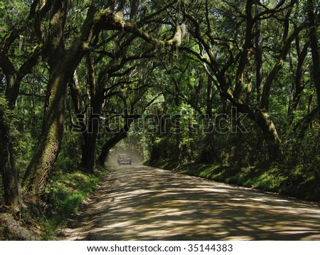 Dirt Road: a rural back road in the South, sheltered under a beautiful canopy of live oak and spanish moss.