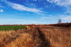 Dirt road between fields in the countryside on a clear autumn day. Tall dry bruised grass. Autumn rural landscape. Sky and clouds.