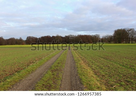 Dirt road between green fields or grassland, a colorful blooming kale field can be seen in the background, picture taken in Oldenburg, Germany  on a winter´s day, copy space for text