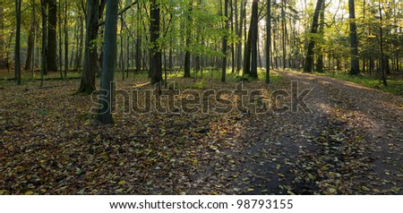 Dirt road crossing old deciduous stand in autumnal morning