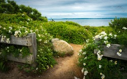 Dirt road entrance to the beach between wooden fences. A large rock and wild rose bushes at seashore with view of Martha's Vineyard on Cape Cod