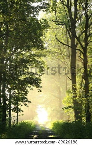 Dirt road in a fresh deciduous forest on a foggy spring morning.