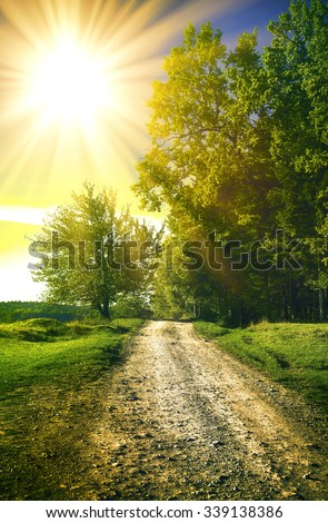dirt road in a sunny spring forest - Shutterstock ID 339138386